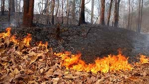 A forest fire along a road in the Mae Hong Son province.