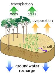 A sketch with arrows shows water leaving trees and grass via transpiration, and soil via evaporation, and runoff water recharging groundwater.
