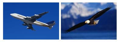 Photos of a jet and eagle, wings spread in flight.