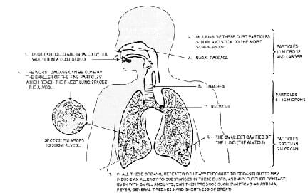 Worksheets Respiratory System Labeling Worksheet Answers polluted air lungs activity www teachengineering org a cut away human body diagram with description of the intake dust particles