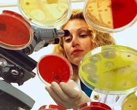 Photo shows a chemical and biological engineering working with a microscope and petrie dishes as she develops new antibotics.