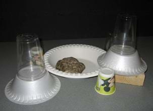 A photograph shows a paper plate, rock, wooden block, and stacked upside-down bowls and cups.