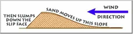 A drawing of a sand hill shows the direction of the wind demonstrating how sand is moved to the top of the slope (hill), and then when the slope is too steep, the sand slumps down the other side.