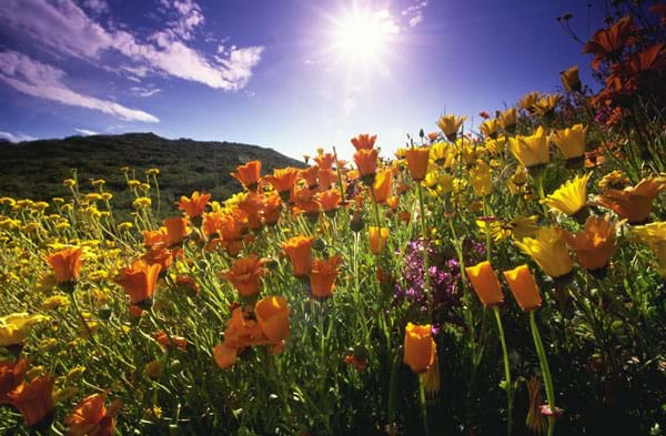 A photograph shows the sun shining on field of flowers.