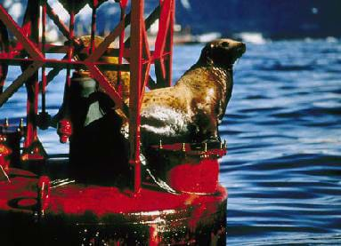 A photograph shows a sea otter sitting on a floating buoy surrounded by blue water.