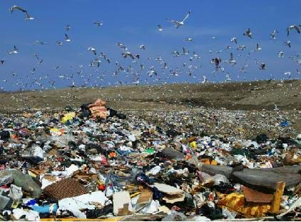 A colorful photograph of a garbage landfill showing acres of trash. Vultures are hovering over the trash, picking up anything edible.