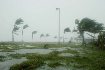 Hurricane Dennis hits palm trees and floods the area in Key West, FL.