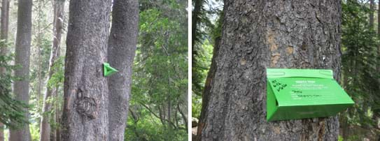 Two images show a green triangular cardboard box affixed to a tall tree in a forest.