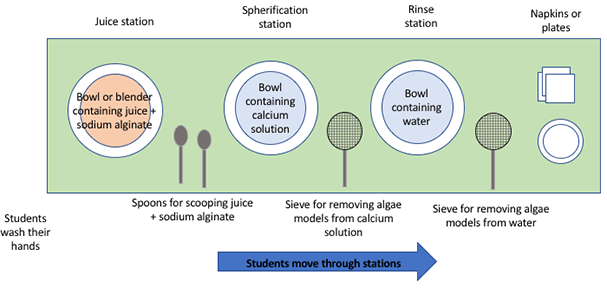 A diagram shows the view from above a long tabletop that is set up for students to move through from left to right through three sub-stations. First, starting from the left, students wash their hands. Next sits a bowl with juice and sodium alginate in it (the juice sub-station) with spoons for scooping the mixture into the next bowl—the calcium solution (the spherication sub-station). Next, use a metal mesh sieve to remove the algal model from the bowl and take it to the last bowl—a bowl of water (the rinse sub-station). Next, use another sieve to remove the algal model from the rinse water and place it on a small plate and/or napkin before eating.