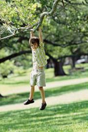 A photograph shows a young boy hanging by his hands from the branch of a tree, with his feet not touching the ground.