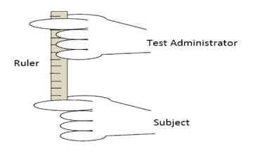 A drawing shows a vertical ruler with test administrator hand holding the top and subject hand placed below the end of the hanging ruler.