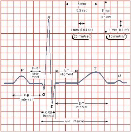 electrocardiograph building activity teachengineering org ekg