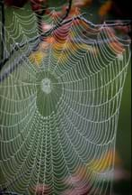 Photo shows a spiral-shaped web glistening with dew.
