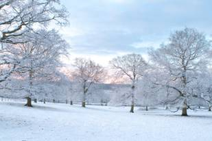 Photo shows a snowy field of ice-covered trees.